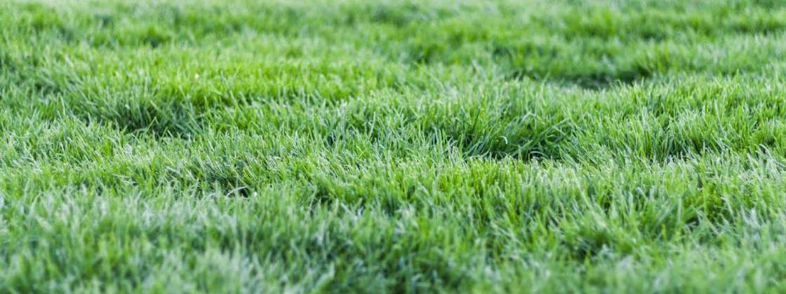 What's the Perfect Time to Plant Lawn Seed?