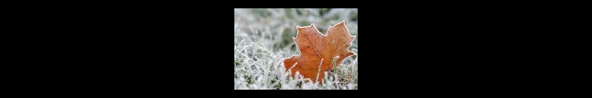 Winter Preparations for your Lawn