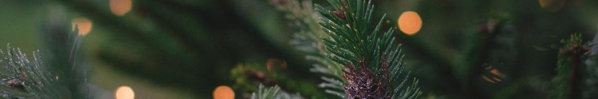 5 Ways to Reuse Your Old Christmas Tree