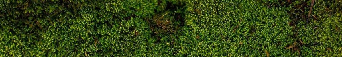 A Green, Spongy Menace: Dealing With Moss in Your Lawn