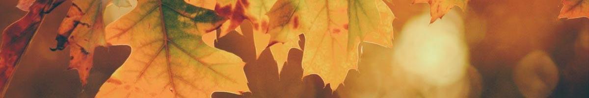 All Those Leaves…
