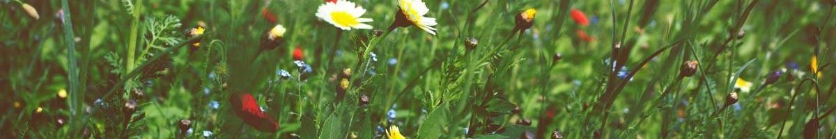 Biodiversity: The Key to Healthy, Successful Landscapes