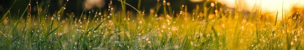 Common Mistakes Made When Establishing a Lawn From Seed