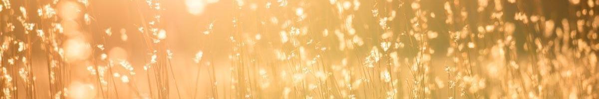 Cool-Season vs. Warm-Season Grasses Explained