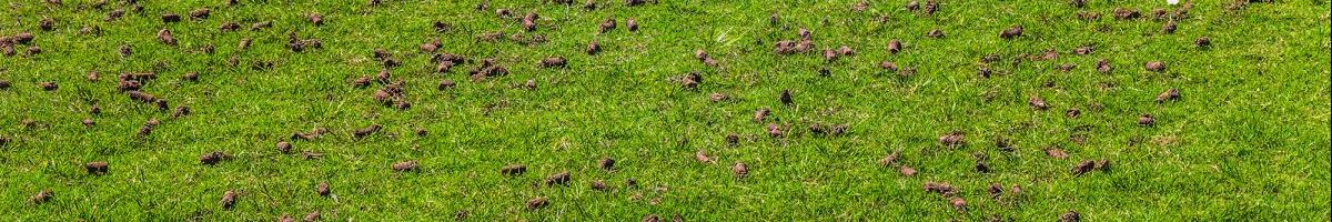 Could Your Lawn Benefit From Core Aeration?