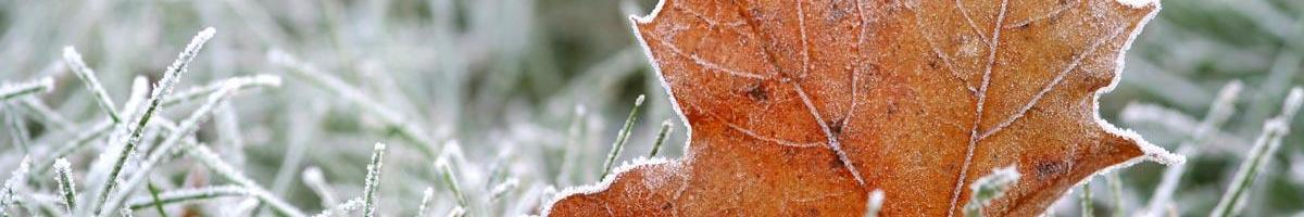 Dealing With Snow Mold in Your Grass