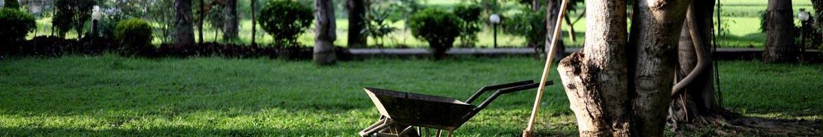 Early Fall Lawn and Garden Tips