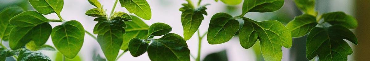 Does a Lot of Fertilizer Make for Better Plants?