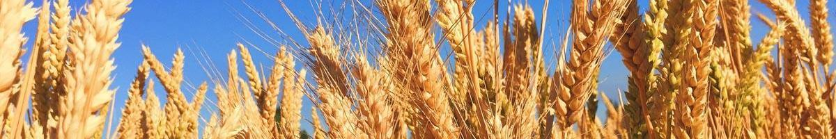 Frequently Asked Questions About GMOs and Our Seed