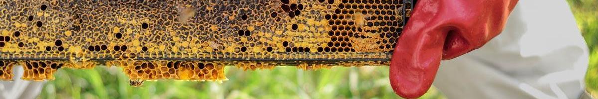 The Future of Beekeeping
