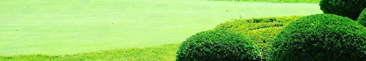 Genetic Grass Color vs. Fertilized Grass Color