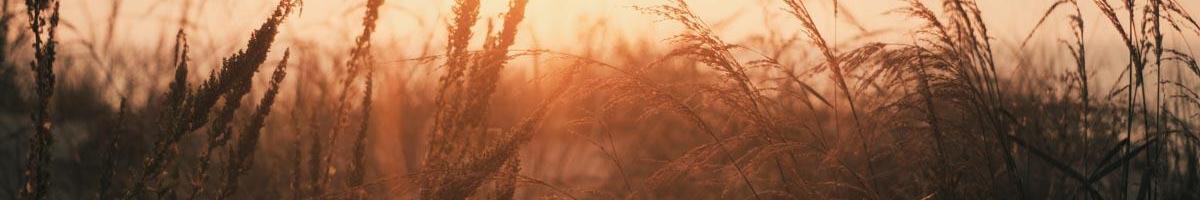 Grass-Cast: New Experimental Grassland Productivity Forecast