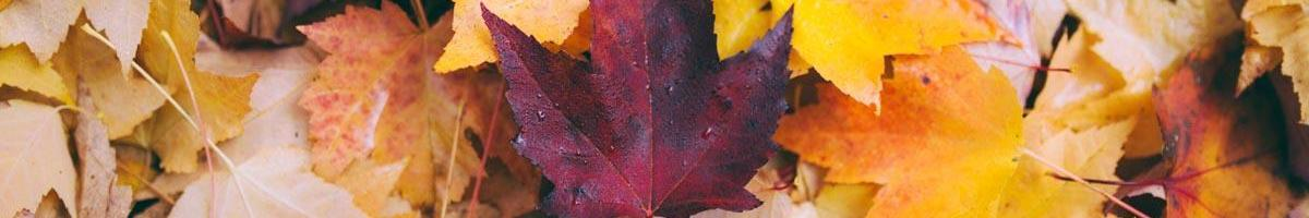 How Fallen Leaves Can Benefit Your Lawn and Garden