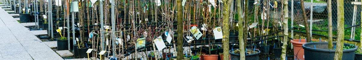How to Pick a Quality Tree at the Nursery