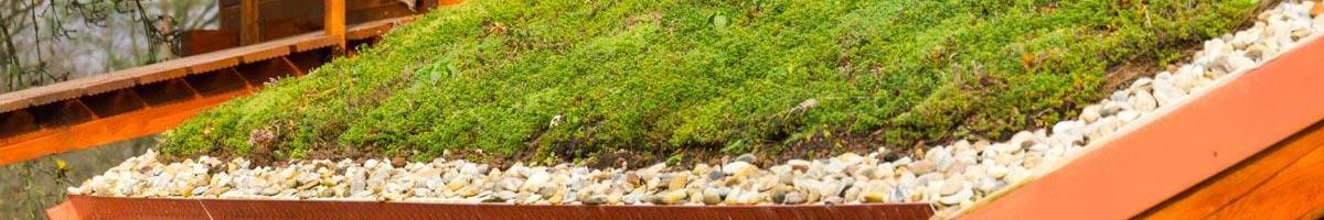 Is a Green Roof Right for You?