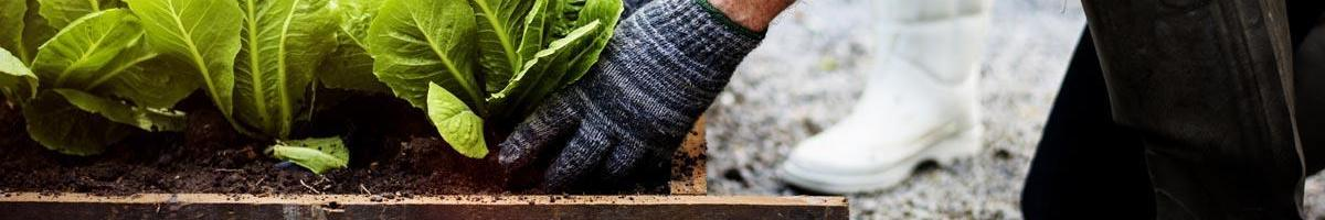 Is Homesteading Right For You? 5 Steps to Take Before Going All-In