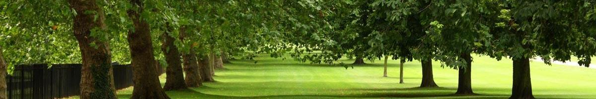 Lawn and Garden Solutions for Shady Areas