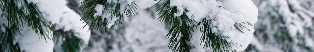 Life Under the Snow: How do your plants survive the winter?