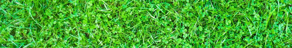 The Teeny-Tiny Clover Trend: Does Microclover Live Up to the Hype?