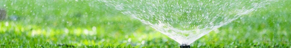 Not Too Little, Not Too Much: Bluegrass Watering Basics