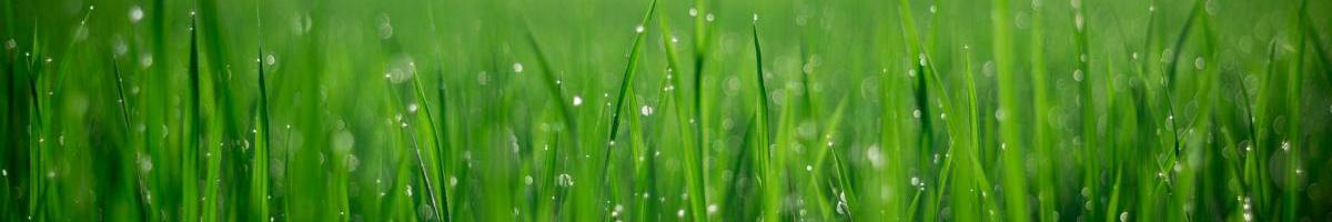 Popular Bermuda Grass Varieties