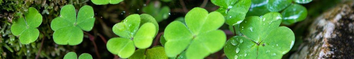 Plant a Saint Patrick's Day Garden