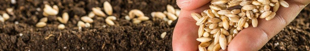 Are You Ready for Planting?