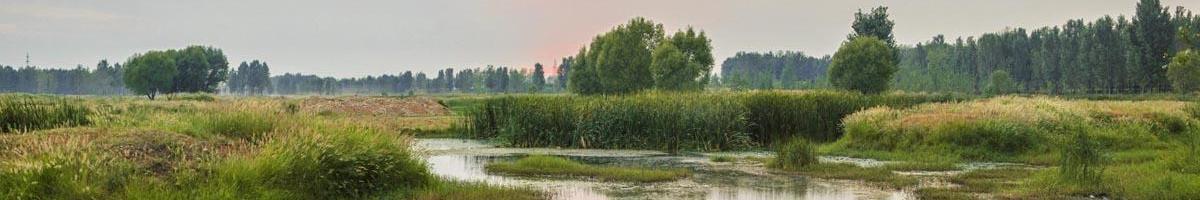 Riparian Rescue: Wetland Restoration, Creation and Enhancement