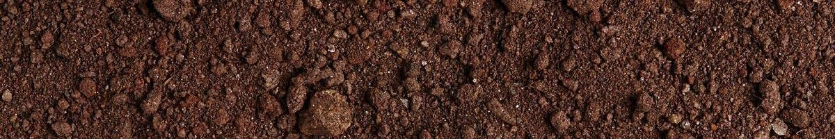 Sand, Silt, or Clay: What Have You Got in Your Soil?