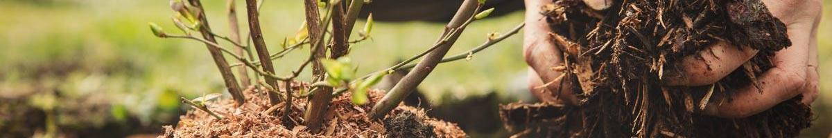 The Benefits of Mulching: A Step Forward in Sustainability