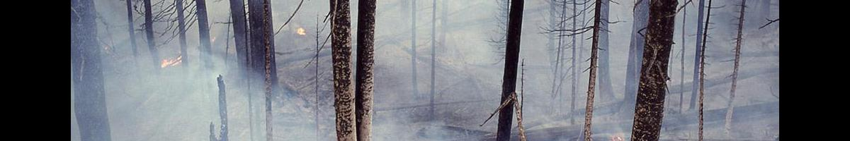 Do Your Part to Prevent Wildfires this Summer
