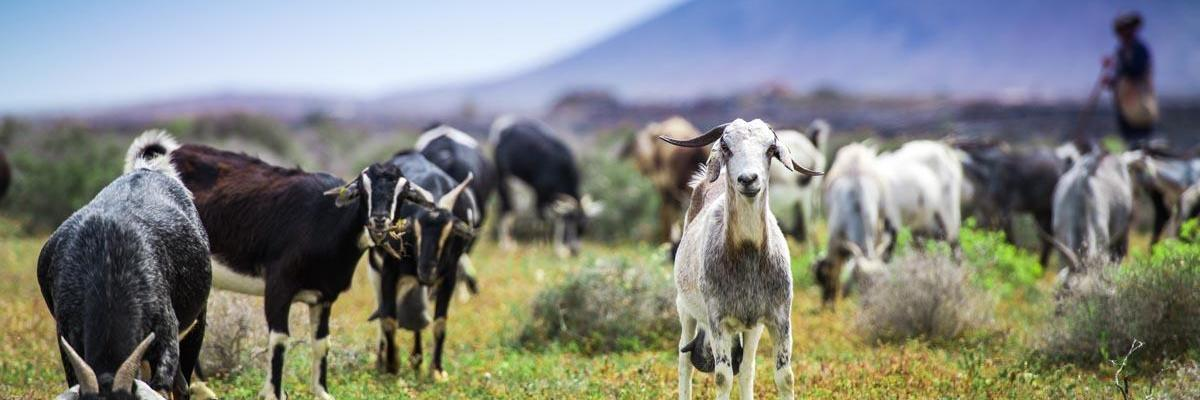 Goat Seed | Goat Pasture Seed Mix | Nature's Seed
