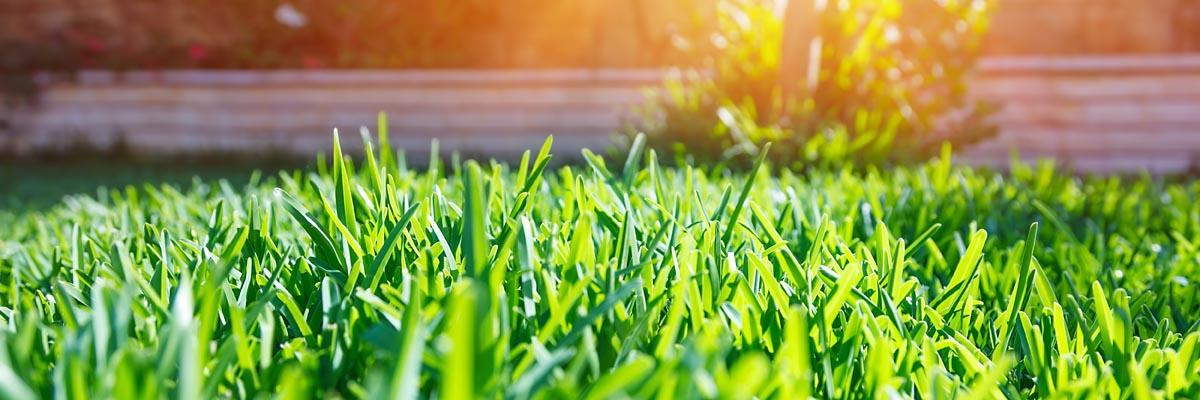 Grass Seeds Best Grass Lawn Seed Nature S Seed
