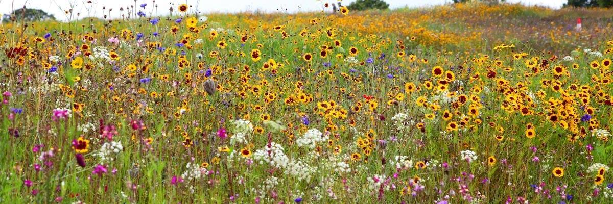 Individual Types Of Wildflower Species Nature S Seed
