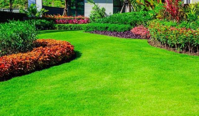 Identifying 5 Common Lawn Grass Species