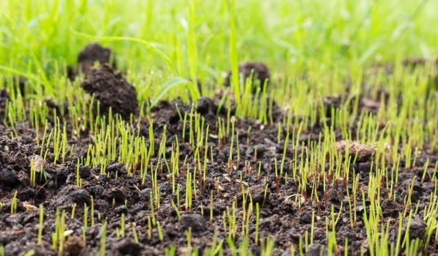 Should You Ever Let Your Lawn Go to Seed?