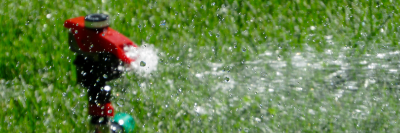 The Best Time to Water Your Grass