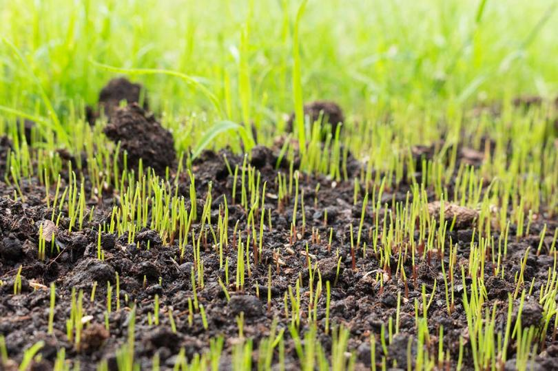 A Guide to Grass Seed Germination