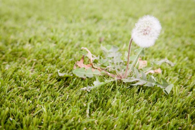 How to Kill Weeds and Dandelions in Your Lawn