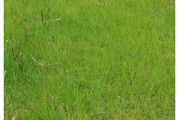 Individual Pasture Species