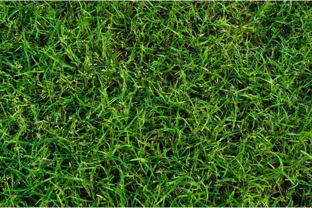 Bermudagrass Seed Blend