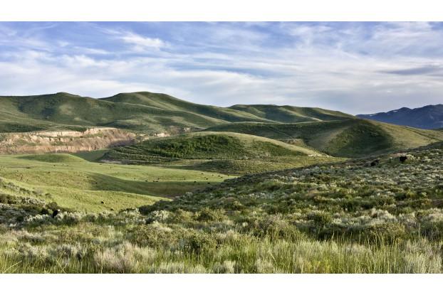 Southwest Transitional Erosion Control Blend
