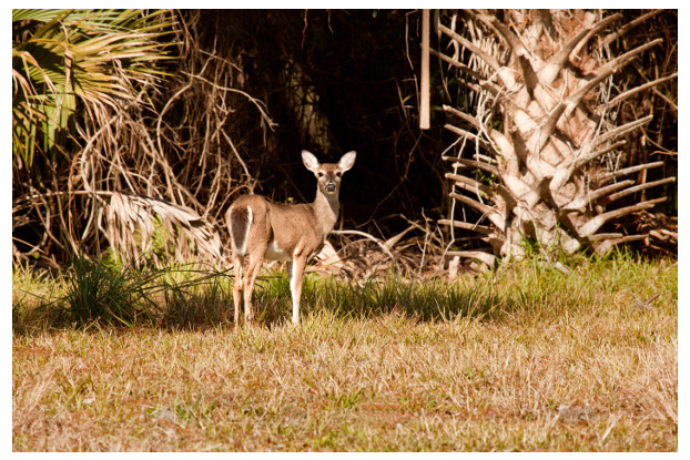 Florida Tropics Big Game Food Plot Blend