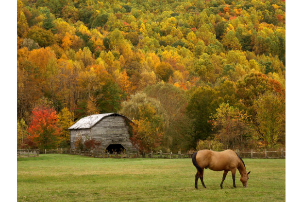Great Lakes/New England Horse Pasture