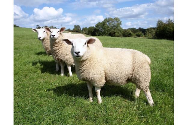 Great Lakes/New England Sheep Pasture