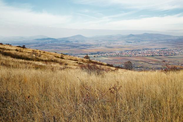 Intermountain West Dryland Pasture Blend