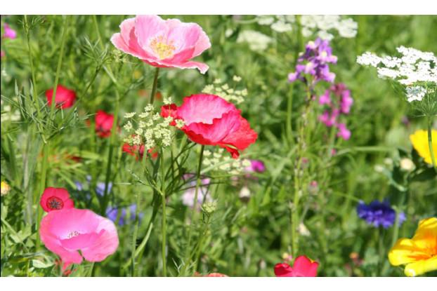 Northeast Wildflower Blend