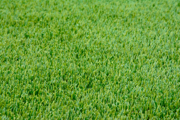 Perennial Ryegrass Seed Blend Nature S Seed