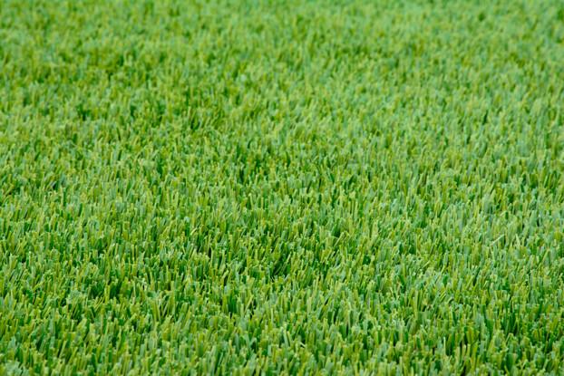 Perennial Ryegrass Seed Blend