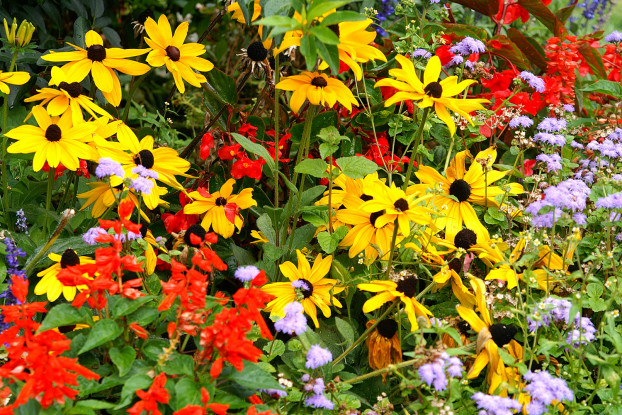 Southeast Wildflower Blend
